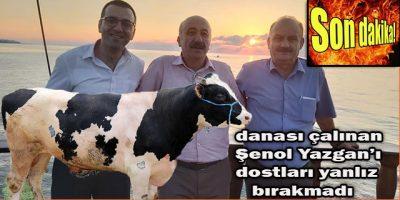 Başkan Yardımcısı Demediler Danayı Aldılar Gittiler ( Dana Çalındı )
