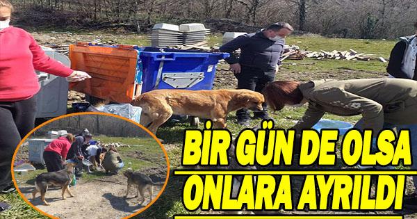 Teşkilat Bir gününü sokak hayvanlarına ayırdı