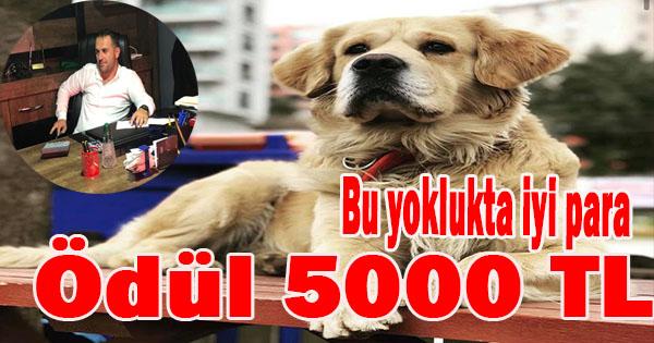GETİR KÖPEĞİ AL 5000 LİRAYI